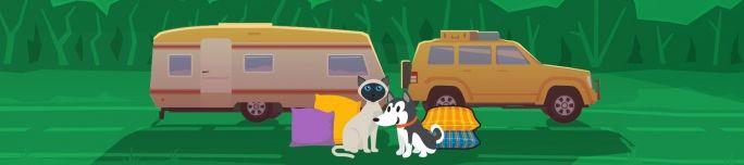 4 trucs pour rendre votre animal confortable en voiture